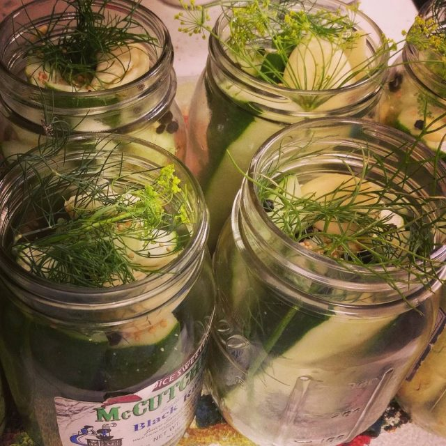 Using up some old jars and unused cucumbers to makehellip