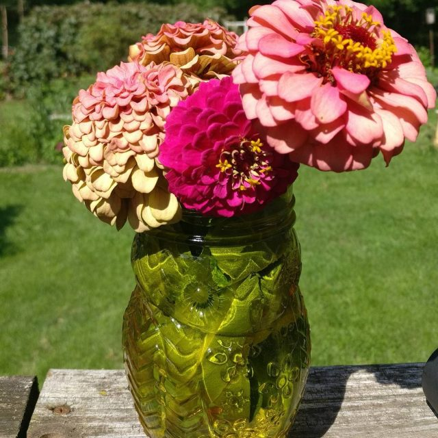 Using up some zinnias to bring color inside flowers gardening