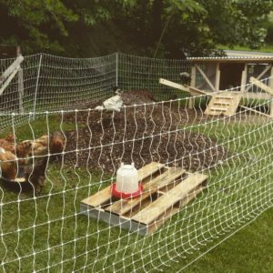 Chicken Tractor Preparing our Winter Garden